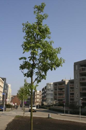 Vierbomen op 16 april 2009 (doorkijkje Paradijslaan)